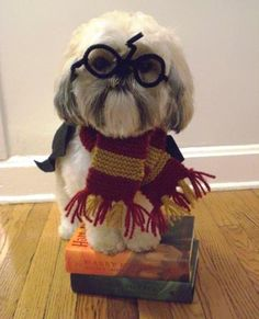 Hairy Pupper.  (which by the way.  I know what I'm making margo dress up as next halloween...)