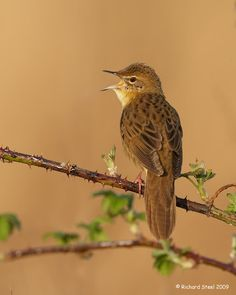 Birding Is Fun!: Groppers by Richard Steel