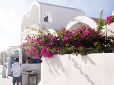 Aria Lito and Santorini Sunsets Santorini 2017, Santorini Sunset, Floral Wreath, Wreaths, Day, Plants, Home Decor, Homemade Home Decor, Flower Crown