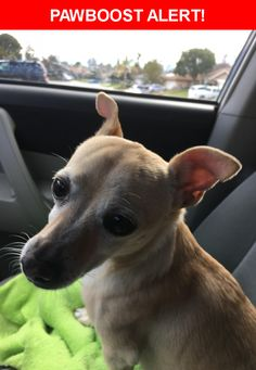 Please spread the word! Hannah was last seen in Bakersfield, CA 93306.  Message from Owner: We are still looking for Hannah, she got out 3-9. She is spayed, and microchipped and is also insured with Banfield pet hospital at petsmart.. She has some hair missing on her back and her tail has a small break at the tip.  Please help bring her home to her family.. We are offering a reward.. 6613320112  Nearest Address: Near Brock Way & la Costa St