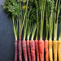 Fotografie Colorful carrots arranged by color. Food photographer Brittany Wright knows likes to capt Food Styling, Food Photography Styling, Amazing Food Photography, Photography Settings, Photography Names, Cooking Photography, Photography Backgrounds, Free Photography, Photography Classes