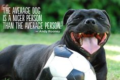 The average #dog, is a nicer person than the average person...