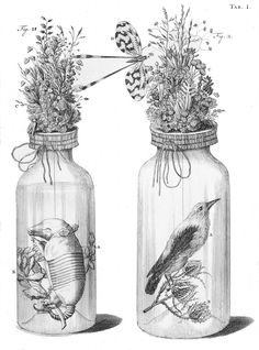 The Embalming Jars of Frederik Ruysch | The Public Domain Review