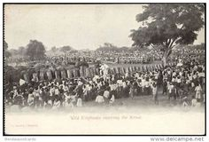 Cartes Postales - siam thailand, Wild Elephants entering the Kraal (1899)