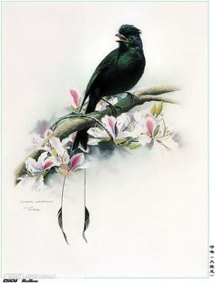 Pinturas de Aves - Taringa!