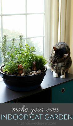 Cat Care Kittens How to Make an Amazing DIY Indoor Cat Garden via - Cat Care Tips, Pet Care, Cat Plants, Cat Safe House Plants, Cat Grass, Cat Playground, Kitten Care, Cat Garden, Cat Room