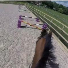 Horse gridwork Friday 👀 - Art Of Equitation Funny Horses, Cute Horses, Pretty Horses, Horse Love, Beautiful Horses, Baby Horses, Horses Jumping Videos, Horse Videos, Show Horses