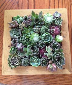 The finished picture frame of succulents. Would look awesome on a coffee table!