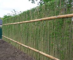 Green Barrier™ living willow hedges, sustainable and aesthetically pleasing. T… Green Barrier™ living willow hedges, sustainable and aesthetically pleasing. T…,Willow Living Privacy Fences, Backyard Privacy, Hedges For Privacy, Backyard Landscaping, Outdoor Privacy, Pool Fence, Living Willow Fence, Cerca Natural, Hedging Plants