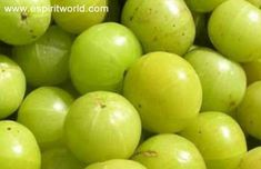 """Indian gooseberry or amla might not taste good but it is surely a """"wonder fruit"""". It can treat so many diseases and thus it is used in ayurvedic"""