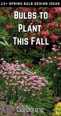 Gardening Inspiration: Spring bulbs to plant this fall in preparation for next year. Don't forget! You'll thank us come spring. Garden Bulbs, Planting Bulbs, Planting Flowers, Flowers Garden, Flowers Perennials, Growing Flowers, Planting Seeds, Peonies Garden, Diy Garden