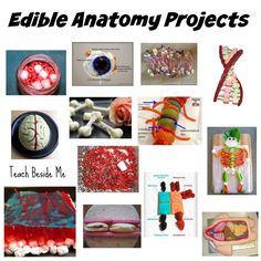 92 best Anatomy Science Projects images on Pinterest in 2018 ...