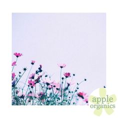 Have a beautiful Sunday, my lovelies! #Happy #Sunday #SundayFunday #Live #Love #ToxicFree #AnAppleADay #OrganicSkincare #AllNatural #Vegan #CrueltyFree #Beauty #SkinCare #SmallBatch #GreenBeauty #ecoSkincare #ShopSmall #GreenvilleSC #yeahTHATgreenville #HaveABeautifulDay #BeautifulSkinStartsHere #AppleOrganics #Shop #Follow #OrganicBeauty #NaturalBeauty #WomenInBusiness