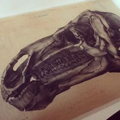 #Unpacking the incredible drawings of Gustave Lavalette in order to digitize them, so they can be studied without touching the original. This drawing of an Iguanodon head is from 1886. Commissioned after the Bernissart Iguanodons were found (excavations from 1878-1881), Lavalette drew each unearthed skeleton in the position in which it was found. You can find enlarged versions of these drawings in our Dinosaur Gallery.