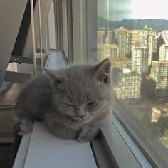 animals and pets animals and pets funny animals and pets funny hilarious so cute animals and pets puppies animals and pets dogs animals and pets memes Cutest Animals On Earth, Animals And Pets, Funny Animals, Funny Cats, I Love Cats, Cool Cats, Kittens Cutest, Cats And Kittens, Cat Aesthetic
