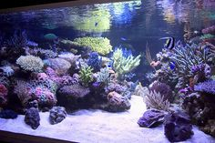 """Reef Aquarium Aquascape Designs 