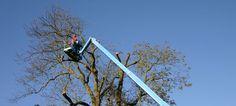 Tree Surgeons Ealing -Ealing Tree Surgeons provide tree care services in Ealing, Brentford, Acton, Kew and surrounding areas. Tree Surgeons, Brentford, Tree Care, Utility Pole, Surgery, Brentford F.c.