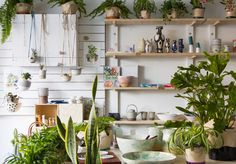 The old Botanical Institute has a new name, but its core offering of locally crafted ceramics, jewellery and cards hasn't changed.