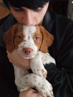 Brittany Spaniel Dogs, Spaniel Puppies, Cute Dogs And Puppies, I Love Dogs, Doggies, Animals And Pets, Baby Animals, Cute Animals, Best Dog Breeds