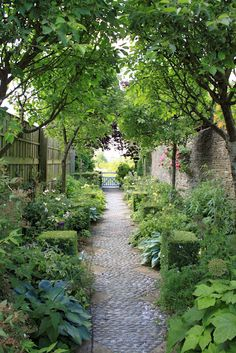 Great narrow space garden - About the width I have. I love the canopy created and focal point with the blue gate.