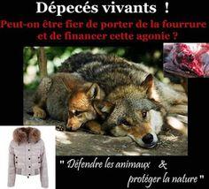 Horrible!!!!!N'acheter pas des choses comme ça...je vous en pris mettez vous a la place de ces pauvres animaux!