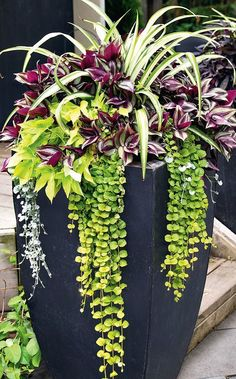 Container Gardening Using planters- Gardening For Beginners - The way to start Gardening For Beginners is using planters. How to tips on where to place planters, what plants to look for, and how to arrange them. Container Flowers, Container Plants, Container Gardening, Jardiniere Design, Pot Jardin, Garden Planters, Box Garden, Herb Garden, Garden Cottage
