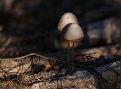 puszikávé: Miről másról...az őszi erdőről megint..