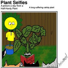 Our catnip plant will definitely relate to this. Catnip Plant, Plant Cartoon, Comics, Day, Plants, Pictures, Fictional Characters, Photos, Cartoons