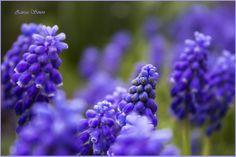 blue purple flower from my garden