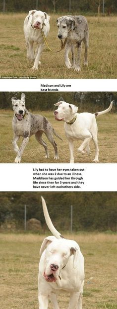 So awesome :'). ❤️ dogs