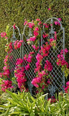 Scroll Wall Trellis (140043) $229.00 4.7 out of 5 14 reviews | Write a review | Questions & Answers Our versatile Scroll Wall Trellis is an artful display and the perfect support for climbing vines.