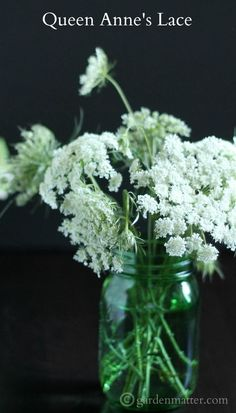 Learn about this beautiful wild flower commonly known as Queen Anne's Lace, it's history and the difference between it and some other dangerous look alikes. Lace Flowers, Cut Flowers, Fresh Flowers, Wild Flowers, Beautiful Flowers, Wedding Flowers, Queen Annes Lace, Diy Garden Projects, Growing Flowers
