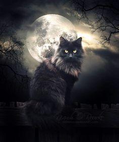 oohh I love this kitty