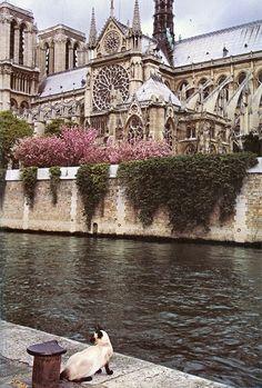 A Catedral de Notre-Dame de Paris é uma das mais antigas catedrais francesas em estilo gótico. Iniciada sua construção no ano de 1163, é dedicada a Maria, Mãe de Jesus Cristo, situa-se na praça Paris, na pequena ilha Île de la Cité em Paris, rodeada pelas águas do Rio Sena. Torna-se ainda mais famosa, depois que Victor Hugo escreveu, em 1831, o romance O Corcunda de Notre-Dame. Um gato na margem oposta do Sena observa a Catedral pela visão sudeste.