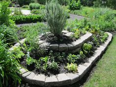 "I think spiral herb gardens are a great idea. However, most scream, ""I'm a hippie!"" which is just not the look I want for Mom's yard. The cement blocks and the tall shrub (I'm assuming rosemary or lavender) give it a more classical air. I wonder what using red brick would do?"