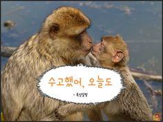 원숭이해_현실적인명언10가지11