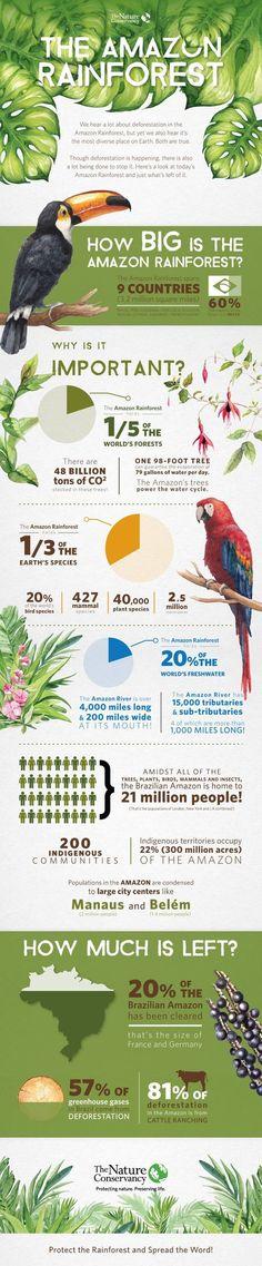 Amazon Rainforest Infographic | The Nature Conservancy