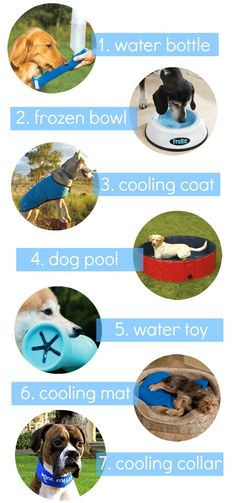 Ways to Keep Cool In The Dog Days of Summer Today on The Dane Dame!