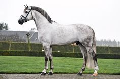 two-strides-out: I reblogged this a second time because I WANT THIS HORSE