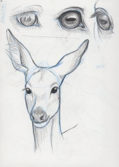 Horse Eyes-Deer Face Study by NoirSan