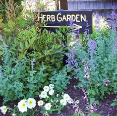 Gardening with Herbs 101: Harvesting Your Herbs