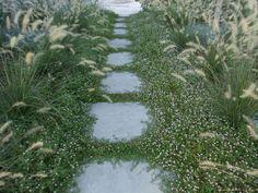 Gardenia jasminoides 'Prostrata' - Cerca con Google