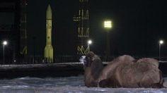 A camel &  a Russian-built Proton-M rocket  at Baikonur cosmodrome in Kazakhstan.