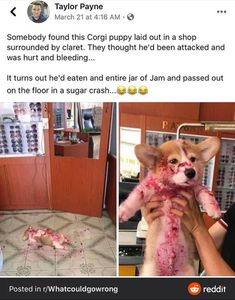 Animal Memes To Kill The Quarantine Time Which Are Impawsible Not To Laugh At Cute Animal Memes, Funny Animal Quotes, Animal Jokes, Cute Animal Pictures, Funny Animal Videos, Funny Animal Humour, Hilarious Animal Memes, Animal Funnies, Dog Jokes