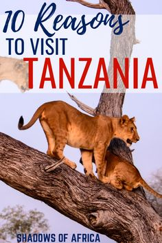 Amazing Tanzania: 10 Reasons to Visit Tanzania in 2019 - Travel to Africa