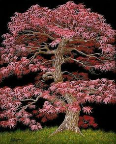 """""""Red Maple Bonsai"""" is an acrylic painting of a Red Maple Bonsai Tree on a black background. This is a powerful image of a majestic bonsai tree. Trees And Shrubs, Trees To Plant, Bonsai Trees, Flowering Trees, Red Maple Bonsai, Maple Tree, Weird Trees, Unique Trees, Trees Beautiful"""