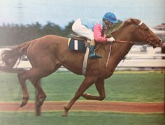VAIN (Aus) Ch c 1966, Wilkes (Fr) - Elated. 14 starts, 12 wins, 2 placings. Champion sprinter, Australian Horse of the Year 1969-70. Winner 1969 Golden Slipper Stakes, Champagne Stakes, Caulfield Guineas etc. Leading Australian sire 1983-84. Progeny included Inspired, Sir Dapper, Rainbeam etc. Great grandsire and great great-grandsire of Black Caviar. Inducted Australian Racing Hall of Fame 2003. Passed away Christmas Day, 1991.