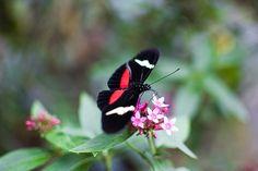 #Parque Arvi, #Medellín #colombia #butterfly #flou #papillon #dephtoffield