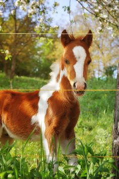 Spring foal -- by *XanaduPhotography. Absolutely too cute
