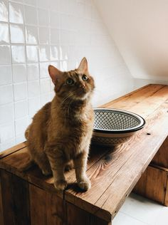 We made a selfmade sinktable and pan inspected Peter Pan, Kitten, Cute, How To Make, Cute Kittens, Kitty, Kitty Cats, Kawaii, Peter Pans